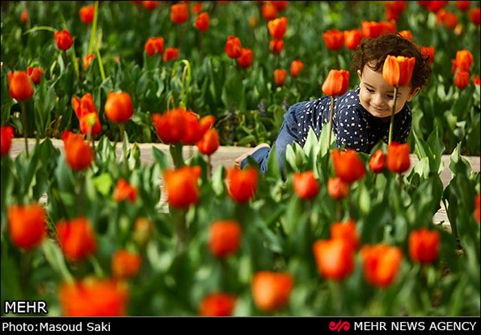 عکس گل های لاله زیبا