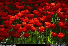 عکس باغ لاله