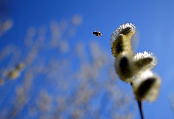 عکس طبیعت بهاری