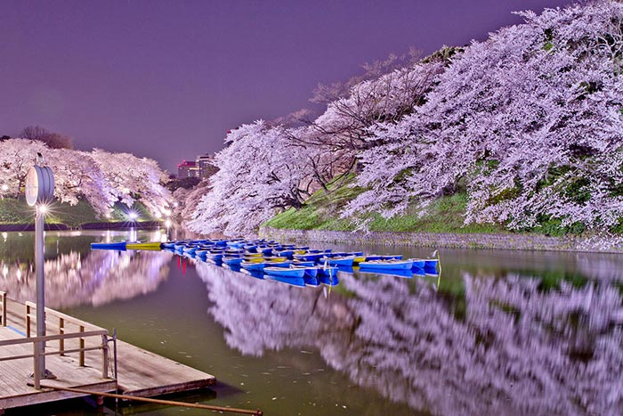 تصاویر زیبا از طبیعت بهاری