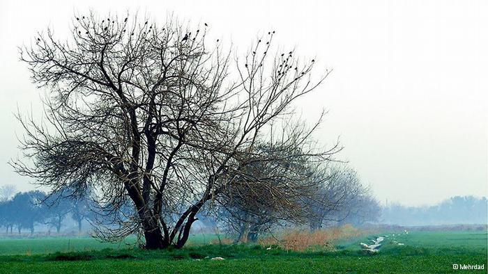 منظره زیبای درختان
