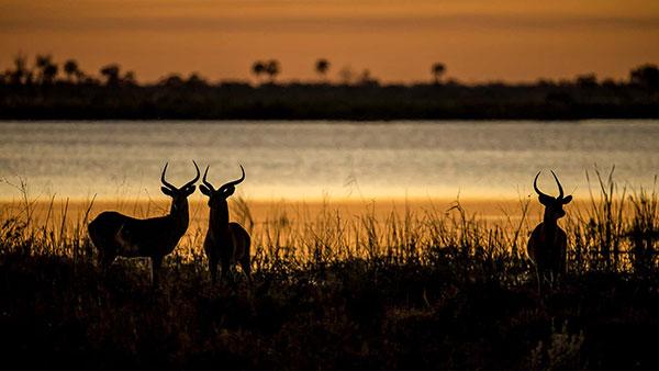 عکس منظره طبیعت و حیوانات