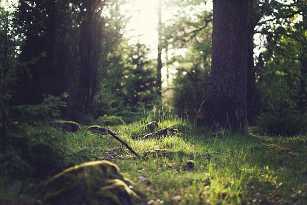 تصاویر طبیعت جنگل