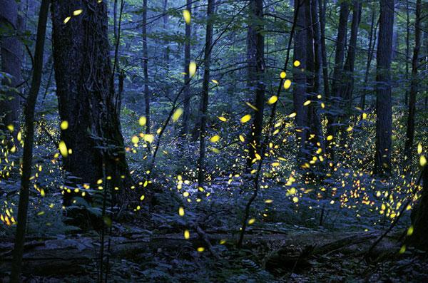 زیباترین تصاویر از کرم های شب تاب