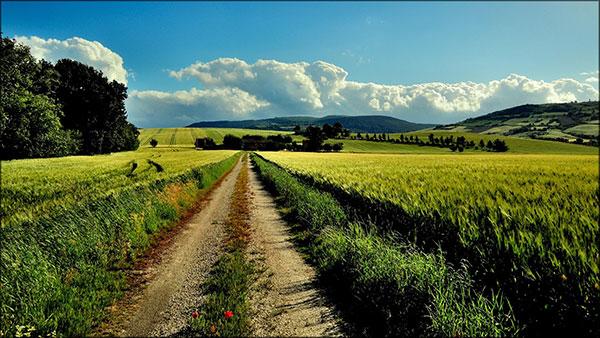 عکس طبیعت جاده زیبا