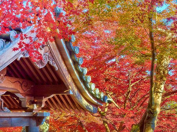 برگ های قرمز و زرد پاییزی