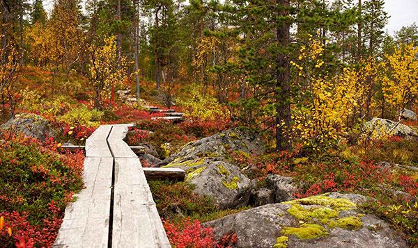 عکس طبیعت جنگل پاییزی