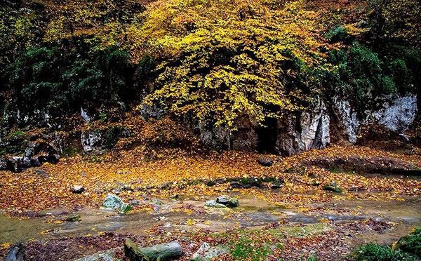 طبیعت پاییزی جنگل گلستان