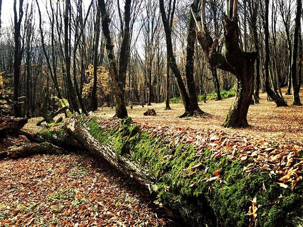 پاییز جنگل گلستان