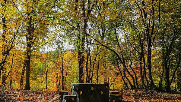 تصاویر زیبای پاییز با کیفیت بالا