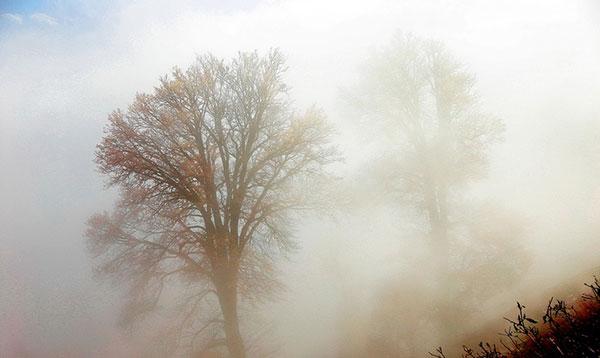 عکس طبیعت مه آلود در پاییز