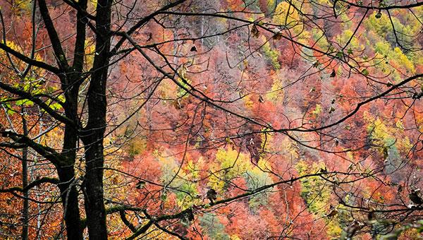 عکس طبیعت پاییز هزار رنگ