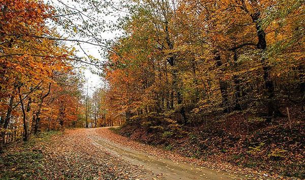 جاده اسالم به خلخال در فصل پاییز