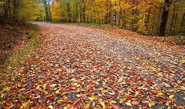 تصاویر پاییزی زیبا و عاشقانه