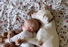 عکس خوابیدن سگ و نوزاد