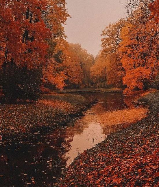 عکس فصل پاییز برای پروفایل