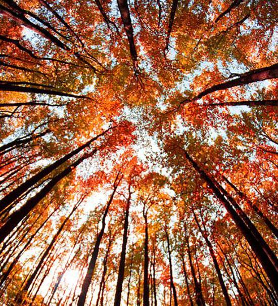 عکس پاییز برای تصویر زمینه