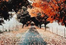 عکس پاییز زیبا برای پروفایل