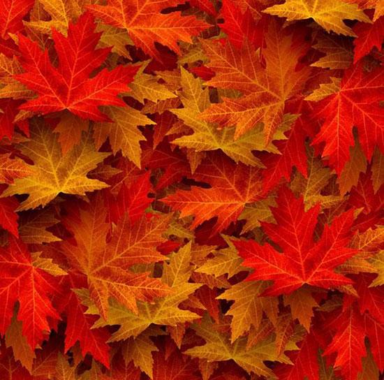 عکس پاییز برای پروفایل خاص