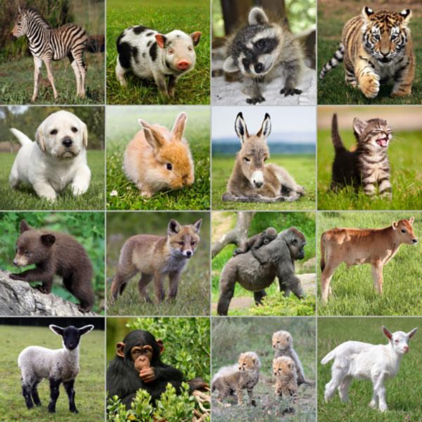 دانستنی هایی درباره حیوانات