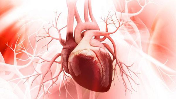 دانستنی هایی در مورد قلب انسان
