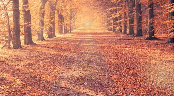 طلوع خورشید در پاییز