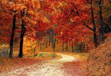 متن غمگین و زیبا درباره ی پاییز