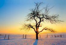 عکس زیبای طلوع خورشید