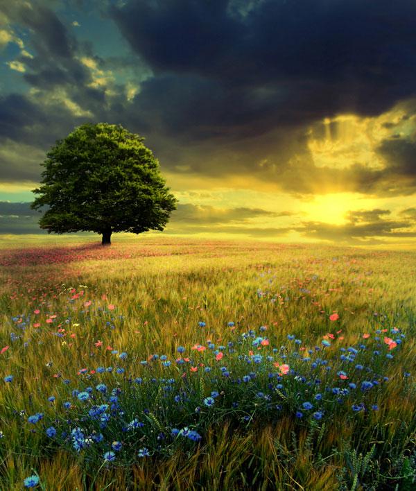 عکس طبیعت رویایی با کیفیت full hd