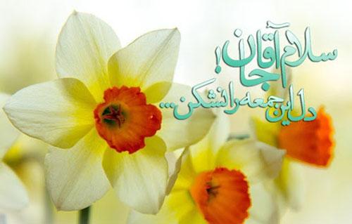 عکس نوشته امام زمان با گل نرگس