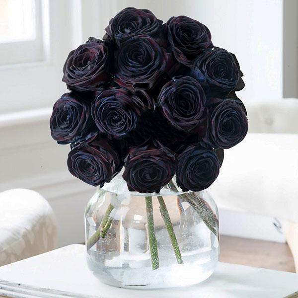 عکس گل رز سیاه برای پروفایل