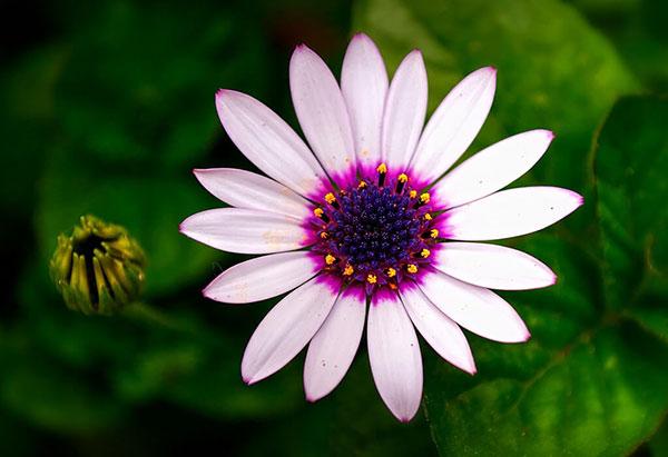 عکس گل صورتی ملایم
