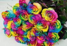 عکس دسته گل رز های رنگی