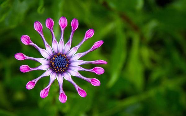 عکس قشنگ ترین گل های جهان