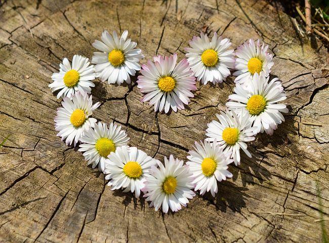عکس پروفایل گل عاشقانه و رومانتیک