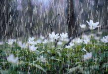تعبیر خواب باران