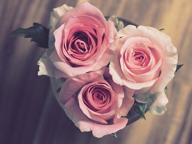 عکس گل عشق برای پروفایل به شکل قلب