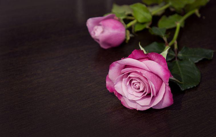 عکس گل رز بنفش برای پروفایل