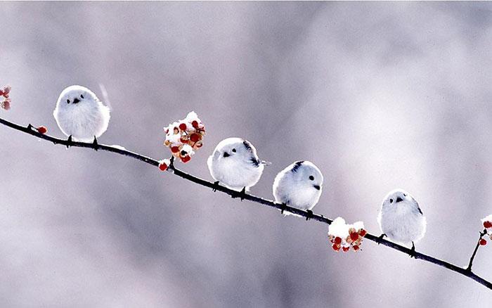 تعبیر خواب پرنده