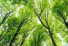 تعبیر خواب درخت