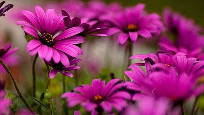 تعبیر خواب گل