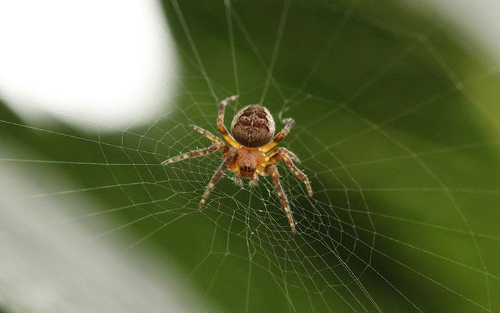 نتیجه تصویری برای عنکبوت