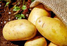 فواید و مضرات سیب زمینی
