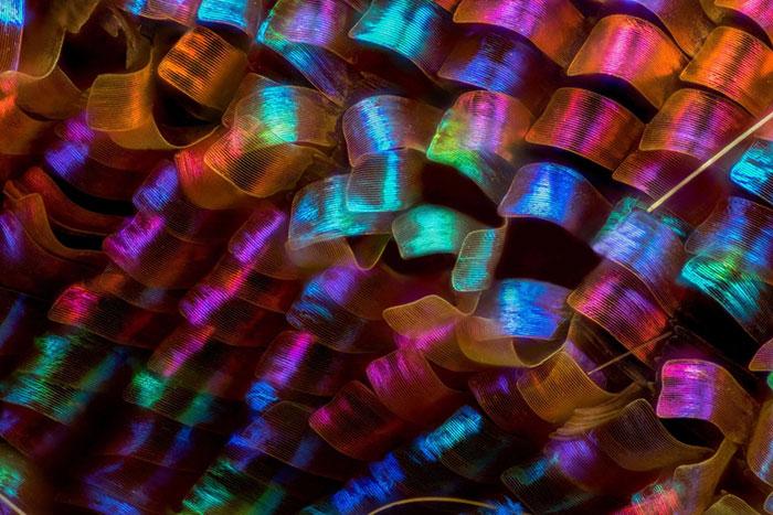 جالب ترین تصاویر میکروسکوپی