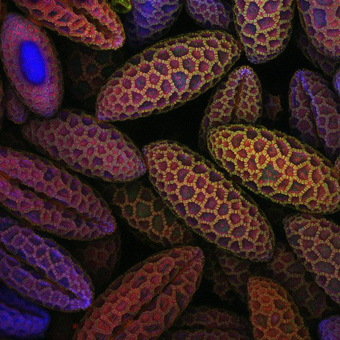 عکس های میکروسکوپی