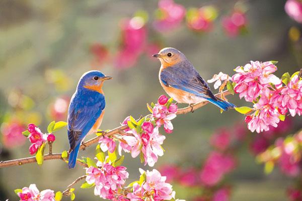 انشا درباره بهار
