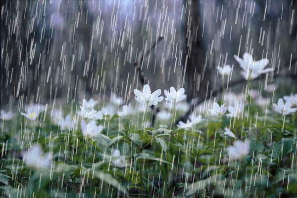 انشا توصیف باران