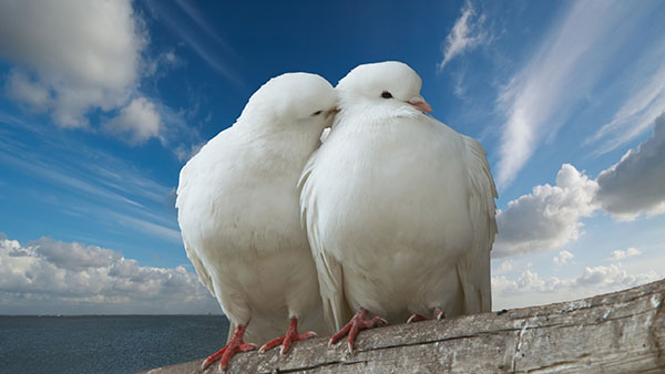عکس عاشقانه دونفره بدون متن لاکچری