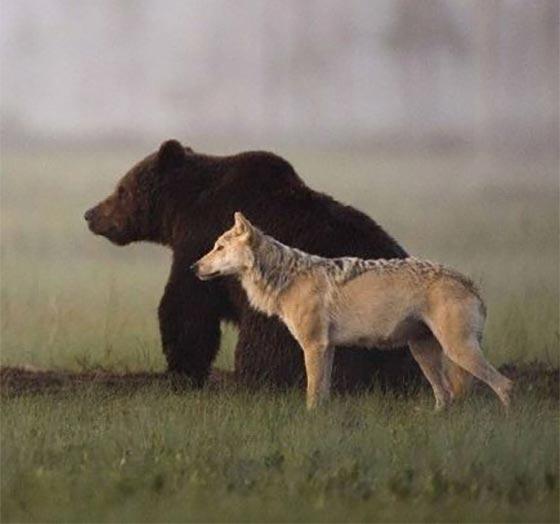 تصاویر دوستی حیوانات