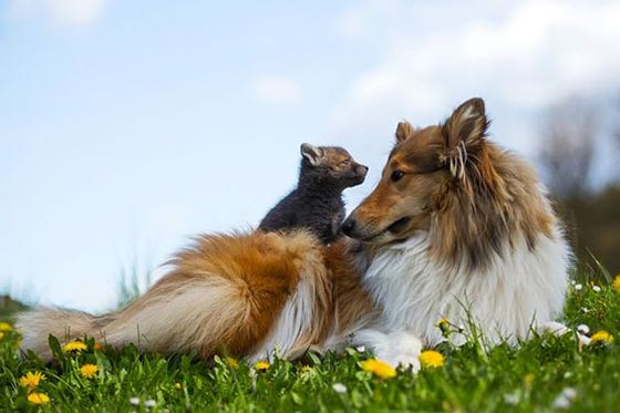 عکس دوستی حیوانات باهم